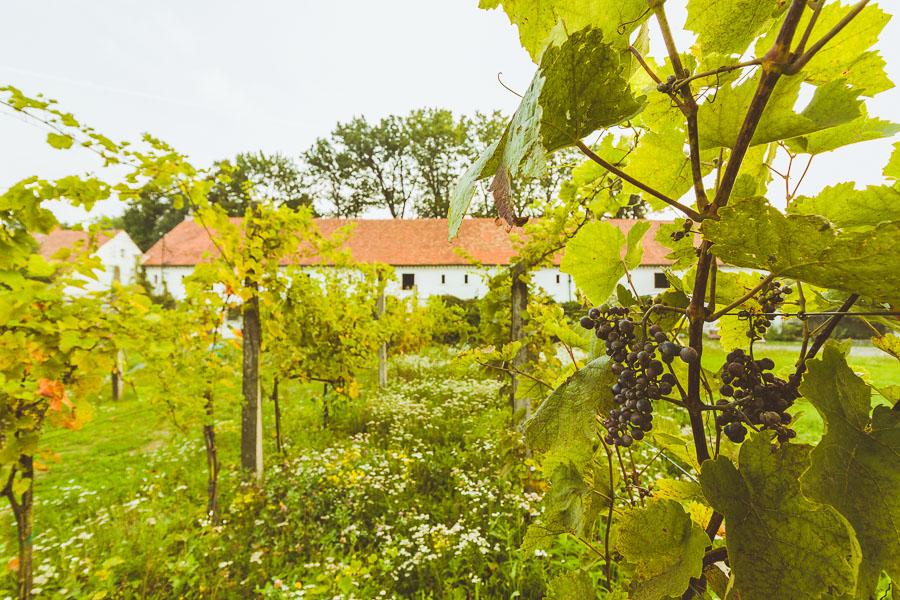 fotograf wroclaw 12 Sesja wizerunkowa | Dobro Krasków